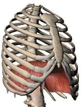 体幹トレーニング① 横隔膜