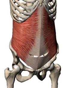 体幹トレーニング④多裂筋